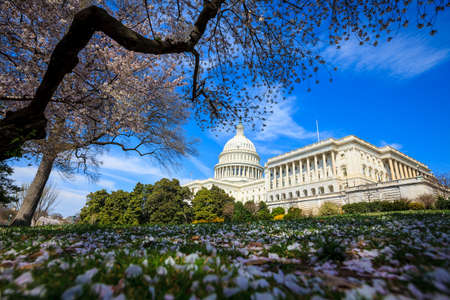 US Capitol Building in Spring - Washington DC United States
