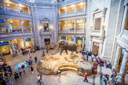 natural history museum: WASHINGTON,DC- APRIL 10: Interior of National Museum of National History on April 10, 2014.It is a natural history museum administered by the Smithsonian Institution at the National Mall.  Editorial