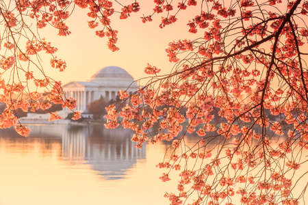 the Jefferson Memorial during the Cherry Blossom Festival. Washington, DC photo