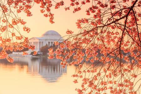 the Jefferson Memorial during the Cherry Blossom Festival. Washington, DC photo