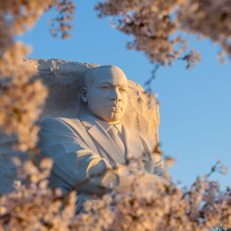 WASHINGTON DC - APRIL 10: The monument to Dr Martin Luther King in Washington DC surrounded by cherry blossoms on April 10, 2014. The memorial opened to the public on August 22, 2011.
