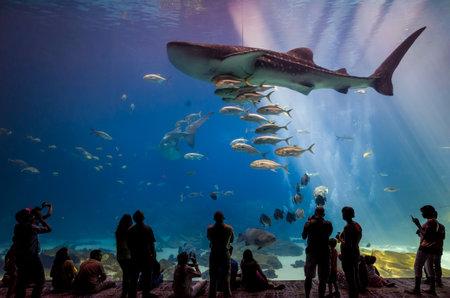 atlanta tourism: ATLANTA, GEORGIA - August 2:Interior of Georgia Aquarium with the people, the worlds largest aquarium holding more than 8 million gallons of water in Atlanta, Georgia on August 2, 2014