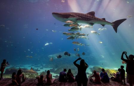 gallons: ATLANTA, GEORGIA - August 2:Interior of Georgia Aquarium with the people, the worlds largest aquarium holding more than 8 million gallons of water in Atlanta, Georgia on August 2, 2014