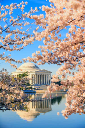 jefferson: the Jefferson Memorial during the Cherry Blossom Festival. Washington, DC Editorial
