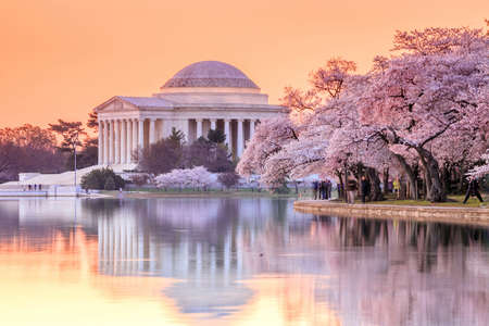 the Jefferson Memorial during the Cherry Blossom Festival. Washington, DC 報道画像