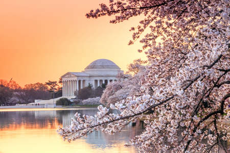 the Jefferson Memorial during the Cherry Blossom Festival. Washington, DC Editorial