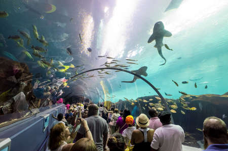gallons: ATLANTA, GEORGIA - August 2:Interior of Georgia Aquarium with the people, the worlds largest aquarium holding more than 8 million gallons of water in Atlanta, Georgia on August 2, 2014