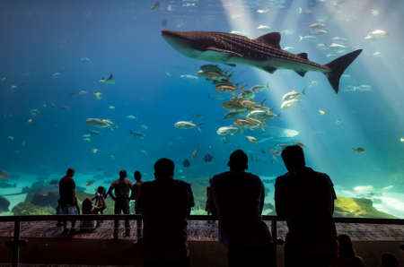 whale sharks and many kinds of fish swimming in aquarium with people observing Stock Photo