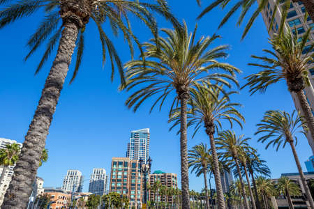 Palm tree and San Diego city Stock Photo