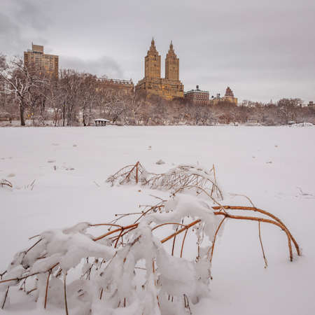 finacial: Central Park after the Snow Strom Linus in Manhattan, New York Stock Photo