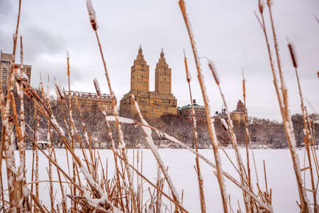 strom: Central Park after the Snow Strom Linus in Manhattan, New York Stock Photo