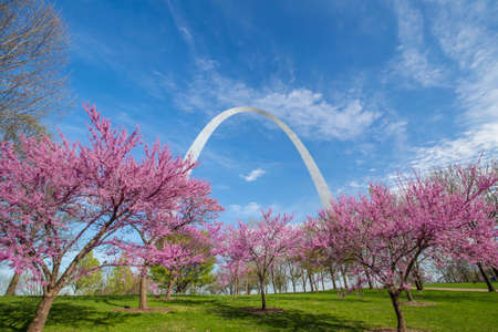 arch: St. Louis Gateway Arch in Missouri with pink flower and blue sky Editorial