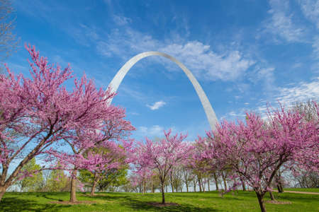 St. Louis Gateway Arch in Missouri with pink flower and blue sky 報道画像