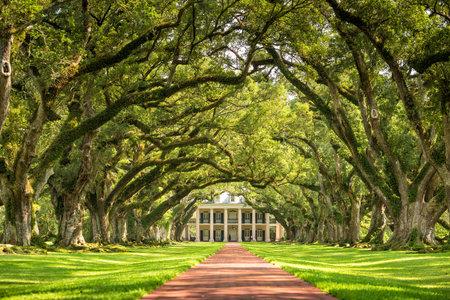 Oak Alley Plantation, Louisiana 新聞圖片