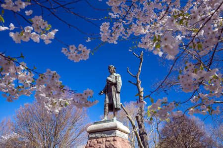haven: Cherry blossom at Wooster Square in New Haven Editorial