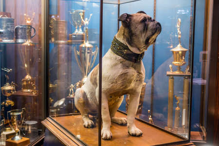 haven: Yale University, New Haven - FEB 23: The original Handsome Dan on February 23, 2016. It is a bulldog who serves as the mascot of Yale Universitys sports teams in New Haven, Connecticut.