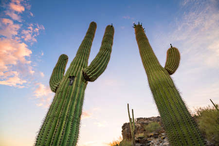 View of Phoenix with  Saguaro cactus at sunrise Stock Photo