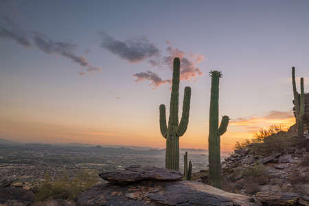 View of Phoenix with  Saguaro cactus at sunrise 免版税图像