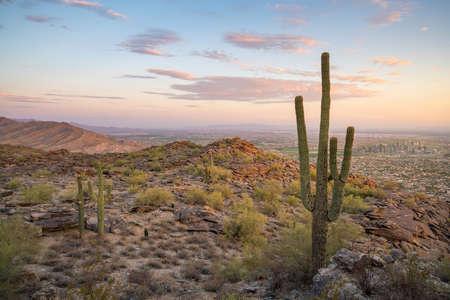 creosote: View of  Saguaro cactus and downtown Phoenix Arizona at sunrise