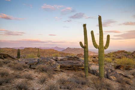 creosote: View of Phoenix with  Saguaro cactus at sunrise Stock Photo