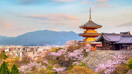 Kiyomizu-dera Temple and cherry blossom season (Sakura) spring time in Kyoto, Japan