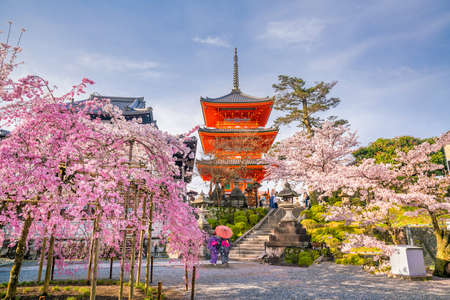 Kiyomizu-dera Temple and cherry blossom season (Sakura) spring time in Kyoto, Japan Imagens - 95724577