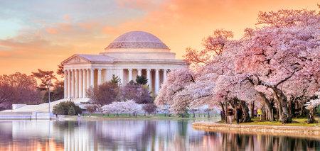 워싱턴 DC에서 벚꽃 축제 기간 동안 제퍼슨 기념관