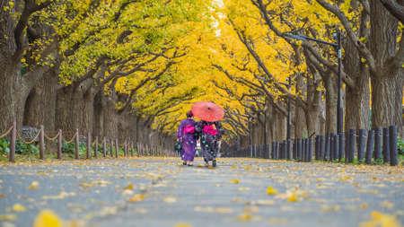 Asian traveller in kimono traditional dress walking in row of yellow ginkgo tree in autumn, Tokyo Japan