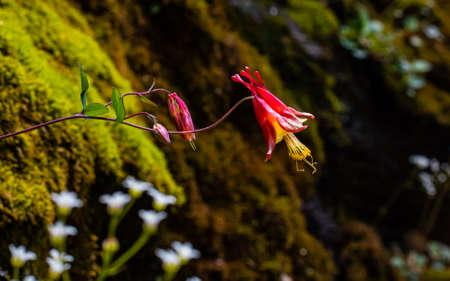 Wildflowers in the Blue Ridge growing in woodland