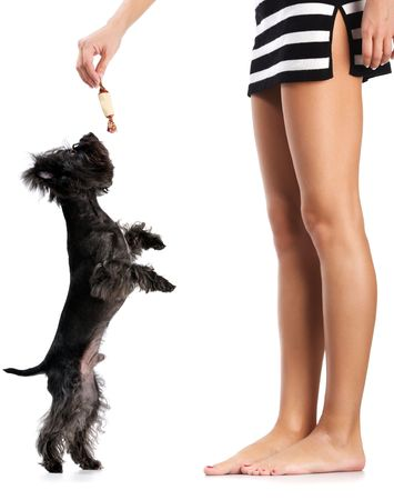 to attract: Girl suits the small doggie a sweet. Image isolated in my studio. Stock Photo