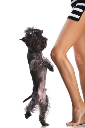 Dancing dog at feet of the woman. Image isolated in my studio.