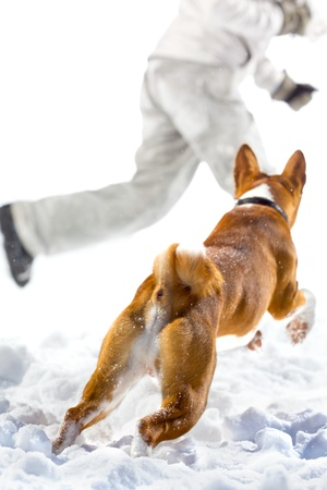 man dog: Red dog attack on a escape man in the snow. Isolated on white background.