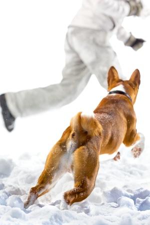 kampfhund: Red Hund Angriff auf eine Flucht der Mensch in den Schnee. Isoliert auf weißem Hintergrund.