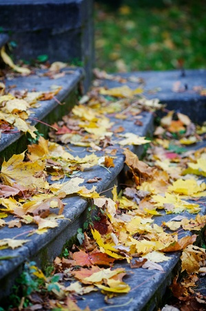 Stone steps are covered by maple leaves. Stock Photo