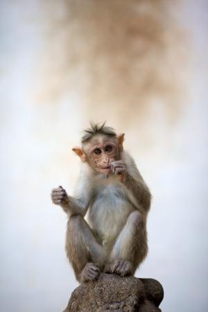 monos: Beb� mono sentado sobre una roca