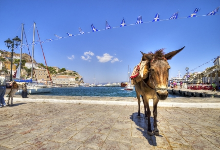 A donkey at the Greek island, Hydra Stock Photo - 20050189
