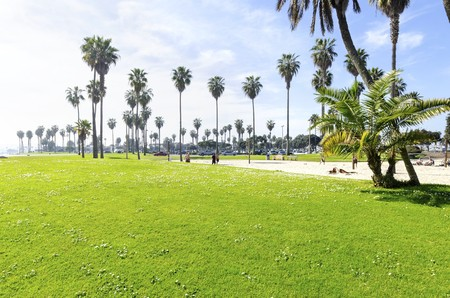 The Bonita cove park in southern Mission Bay over the Pacific beach in San Diego, California in the United States of America. A view of the golden sandy beach, palm trees,volleyball court and clear sky.