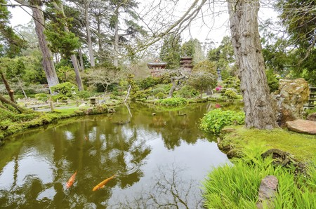 japanese tea garden: The Japanese Tea Garden in Golden Gate Park in San Francisco, California, United States of America. A view of the native Japanese and Chinese plants and pond with koi fish that create a relaxing scenery.