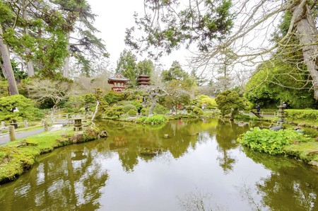 The Japanese Tea Garden in Golden Gate Park in San Francisco, California, United States of America. A view of the native Japanese and Chinese plants, red pagodas and pond that create a relaxing scenery.