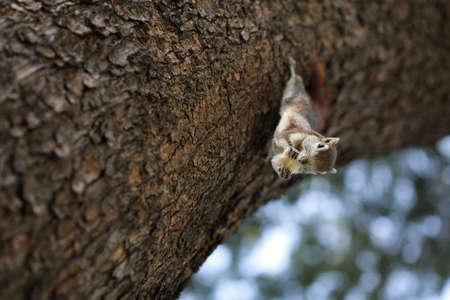 closeup on squirrel  photo
