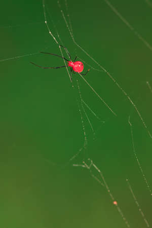 red spider Stock Photo