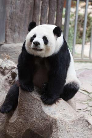 Cute panda Stock Photo