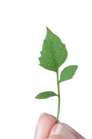 green leafs Stock Photo