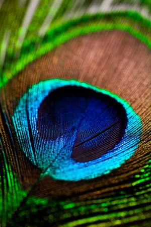 pluma de pavo real: plumas de pavo real