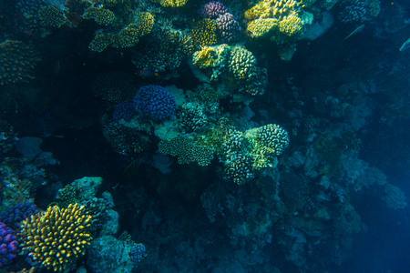 sea coral reef with hard corals, fishes and sunny sky shining through clean water - underwater photo