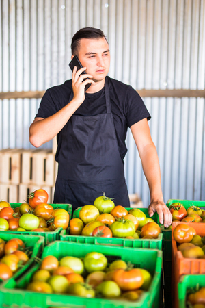 Young man speak on phone with costumers in front collect tomatoes boxes at greenhouse. Online phone sales of tomato orders of costumers family farm business. Agriculture