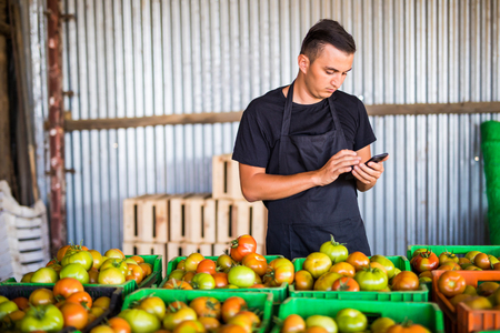 Young man counting or write on phone the quantitate of collect tomatoes at greenhouse. Online sales of tomato on phone orders of costumers. Agriculture