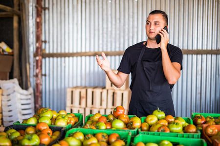 agronomist: Young man speak on phone with costumers in front collect tomatoes boxes at greenhouse. Online phone sales of tomato orders of costumers family farm business. Agriculture