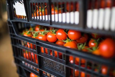 boxes full of fresh tomato vegetables for market at retail.