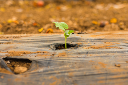planted: Seedling plants planted in greenhouse family business. Agriculture Stock Photo